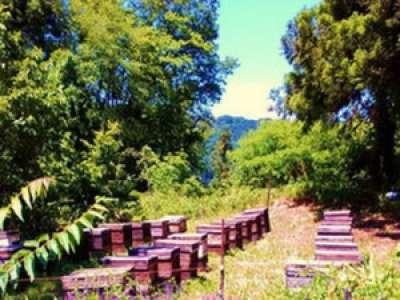 依田養蜂園のアルバイト情報