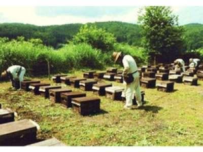 松代養蜂株式会社のアルバイト情報