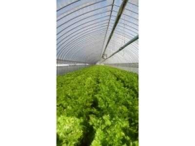 有限会社シノハラ農産のアルバイト情報